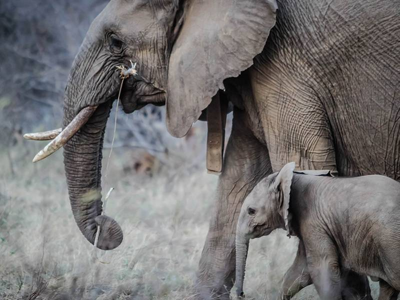 Report - Monitoring of illegal trade in ivory and other elephant specimens - ETIS Report of TRAFFIC