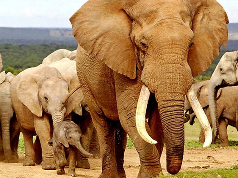 News -Reducing Demand for Ivory: An International Study