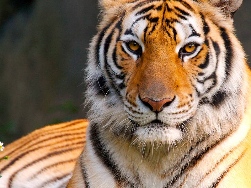 News -Far from a cure, The Tiger Trade Revisited