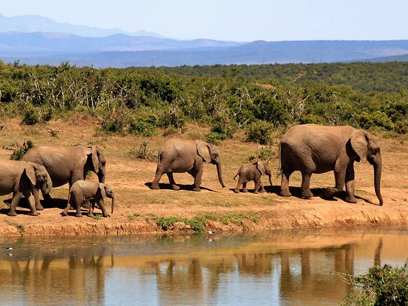 News -TNC Messaging Research Language Memo to Curb Ivory Consumption, Chinese language