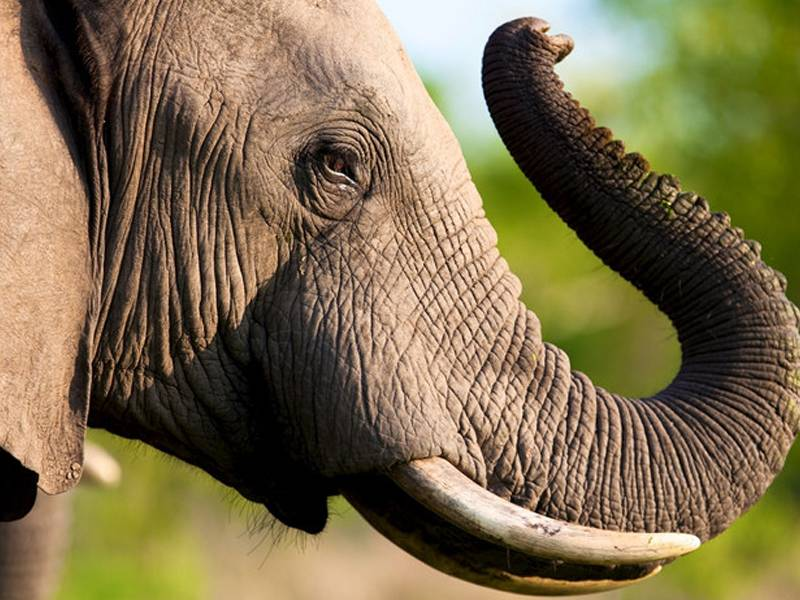 News -USA National Strategy for Combating Wildlife Trafficking & Commercial Ban on Trade in Elephant Ivory